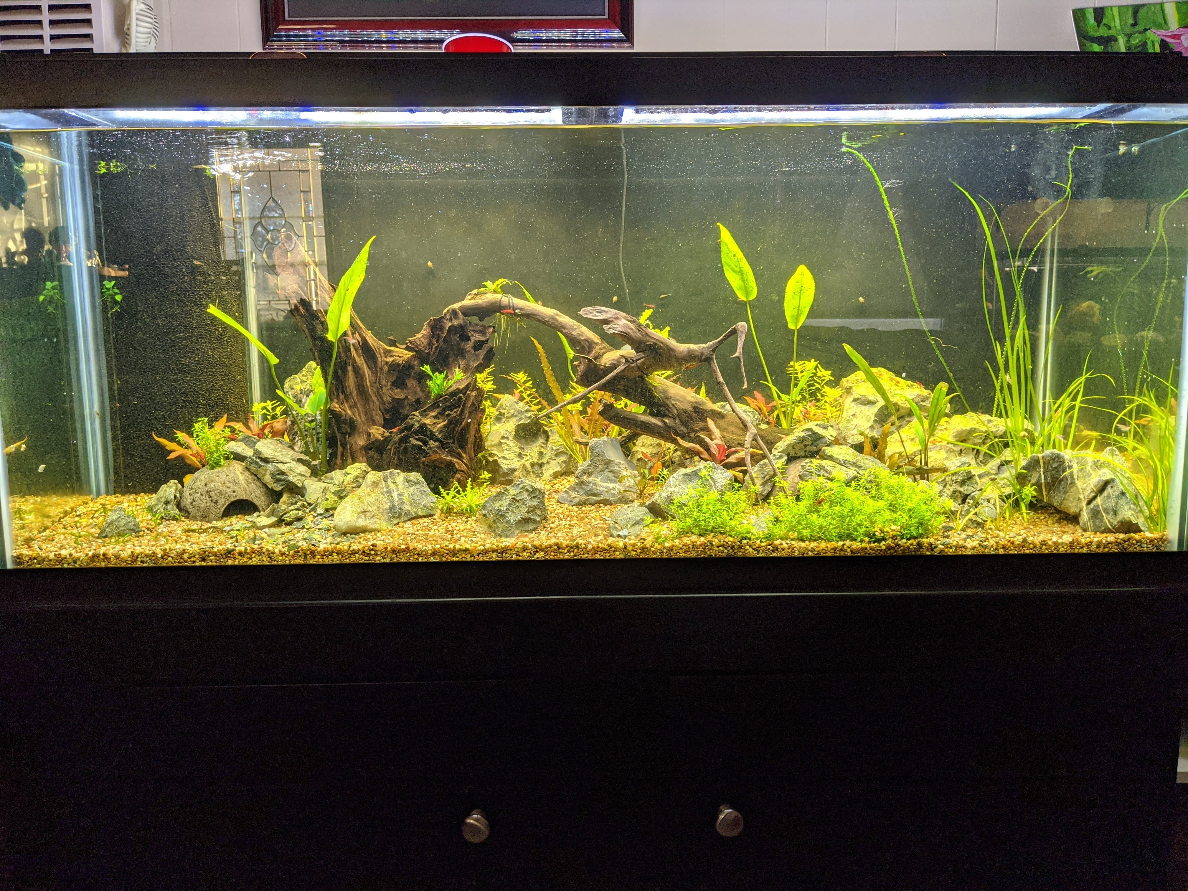 Dustin's Dirt Packs. (Aquarium Substrate Our own Premier Mix)