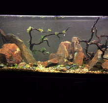 Aquascaping Rocks used in my wife's 55 at work