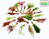 "Our Best Selling ""Beautiful Plants"" Cheap Combo 4 Plants for 19.95"