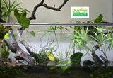 Standard Double Planted Aquarium Lighting of a 30 gallon rimless planted tank.