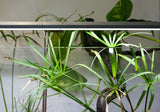 Standard Double, Super thin, sleek design perfect for high or low light aquarium plants.