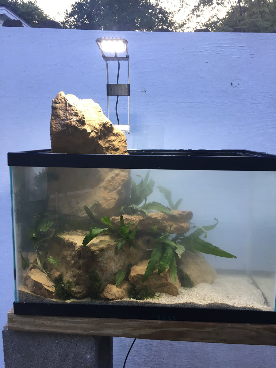 Aquascaping Rocks!! – DustinsFishtanks