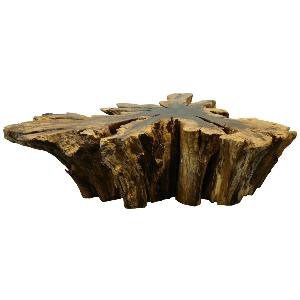 Cassod root wood coffee table organic findings cassod root wood coffee table geotapseo Image collections