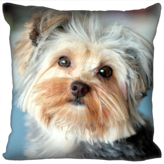 Cute Red Background Funny Yorkshire Terrier Pillow Cases 35 X 35 Cm