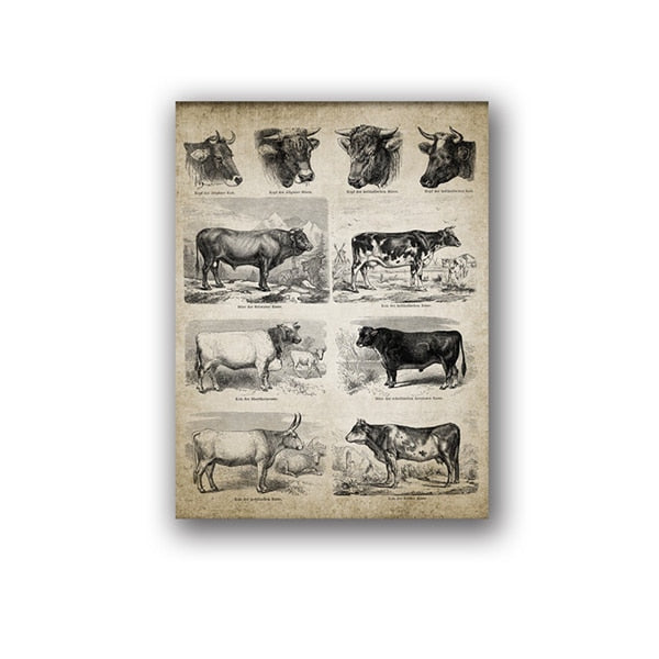 Cow Breeds Canvas Art Prints Farm Poster