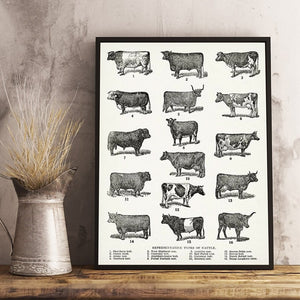 Breeds of Cow Canvas Wall Art Print
