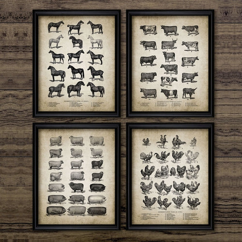 Vintage Farm Animals Poster Print Cow Chicken Pig Sheep and Horse - Wall Art Canvas