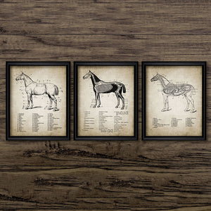 Vintage Horse Anatomy Canvas Posters Print - Home Room Wall Decor