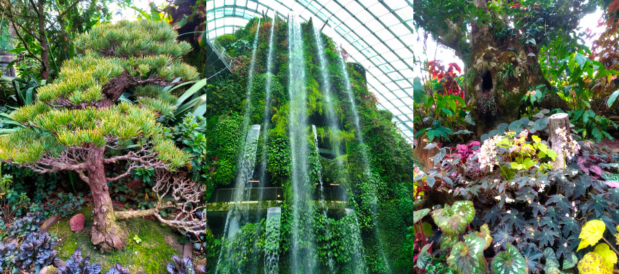 Sunday Shades - Cloud Forest Dome - Waterfall