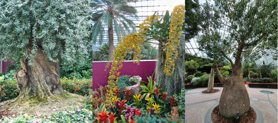 Sunday Shades - Flower Dome Conservatory