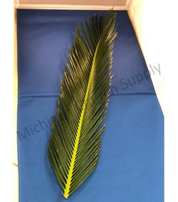 Sago Palm Leaves - JSSAGO