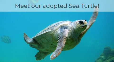 adopted sea turtle