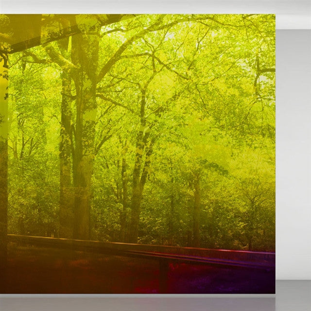 Glass House Spring... wallpaper<BR> by James Welling