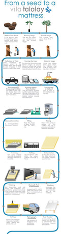 Talalay Latex Process Described.