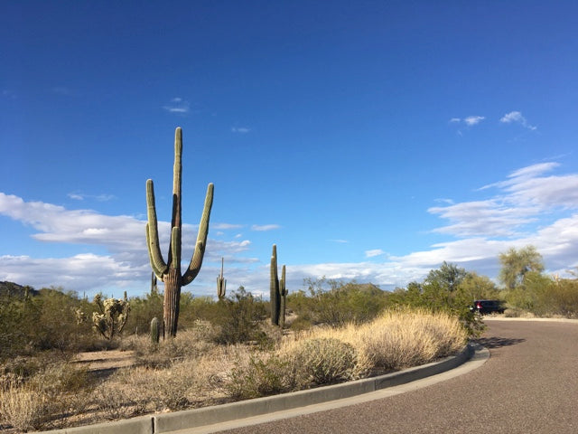 Tonto National Forest - Scottsdale, AZ
