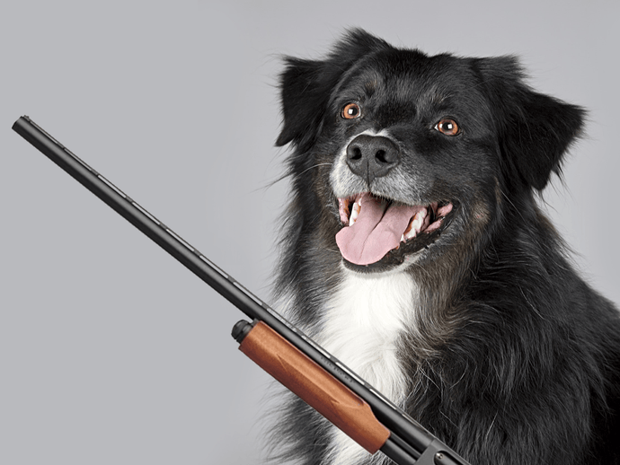 Dog Shoots His Owner on Hunting Trip, Owner Says Dog Still a Good Boy