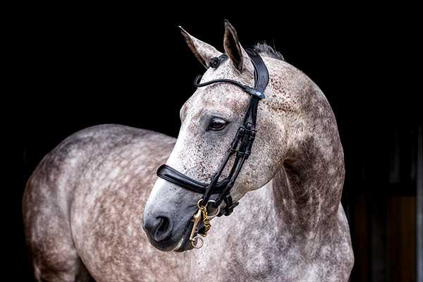 PS of Sweden Double Bridle Paragon Revolution (Standard Sizes)