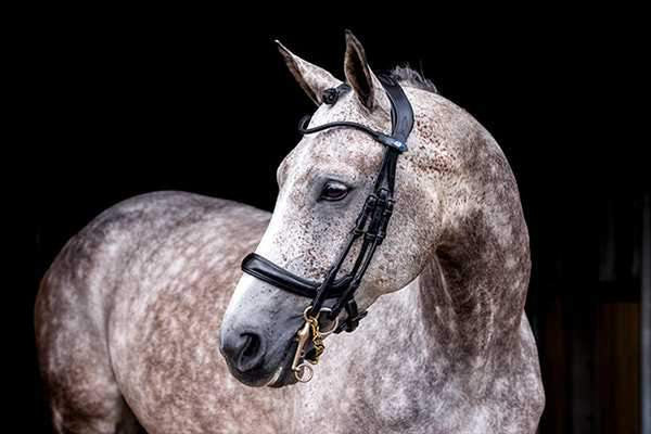 PS of Sweden Double Bridle Paragon Revolution (Custom Sizes