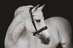 PS of Sweden Flying Change Pony Bridle