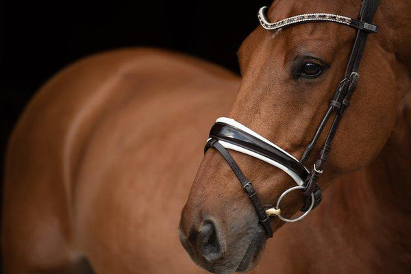 PS of Sweden Bridle GP Non-Patent