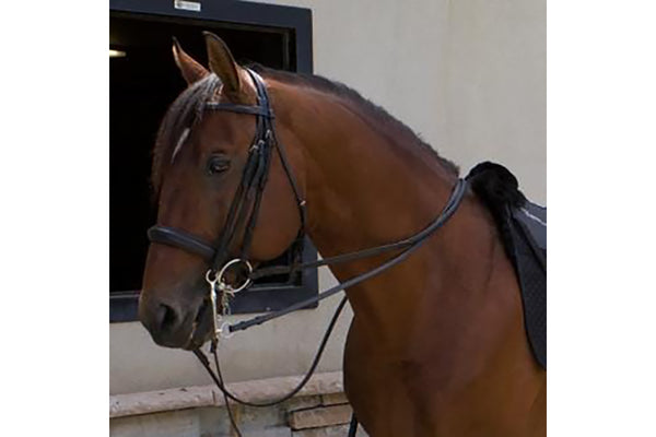 ThinLine Weymouth Padded Double Bridle
