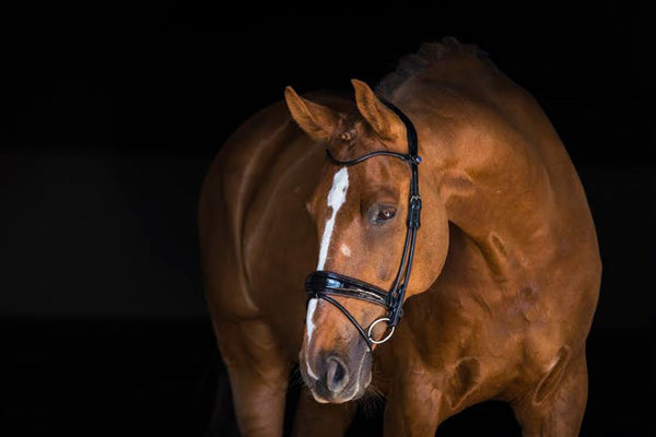 PS of Sweden Bridle All In Revolution (Standard Sizes)