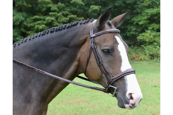 KL Select Italia Wellington Bridle