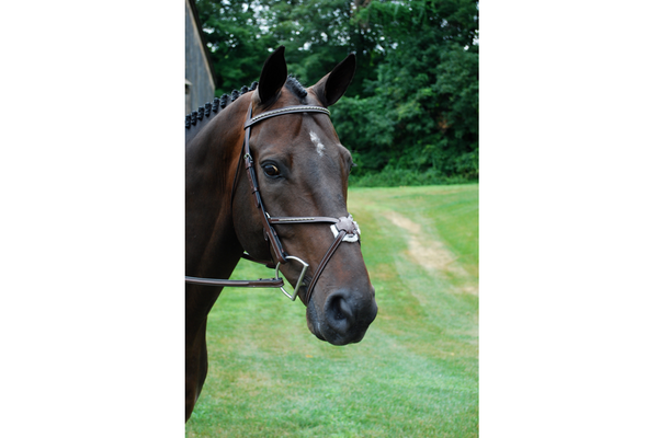 KL Select Matrix Figure 8 Bridle