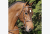 Arc de Triomphe Tribute Bridle with Raised Fancy Laced Reins