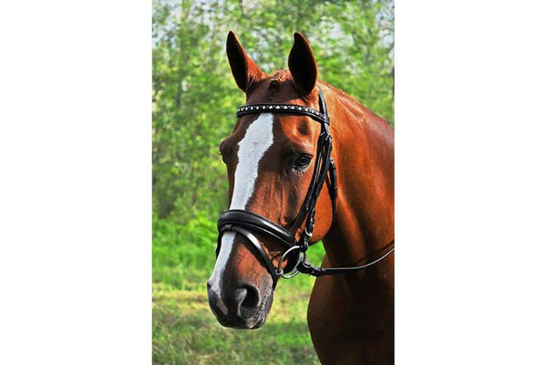 KL Select Red Barn Cadence Bridle