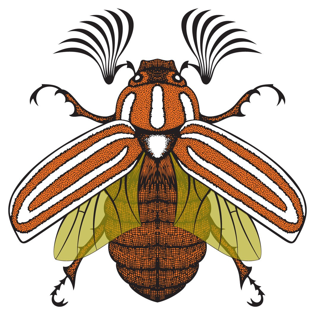 Ten-Lined June Beetle Sticker
