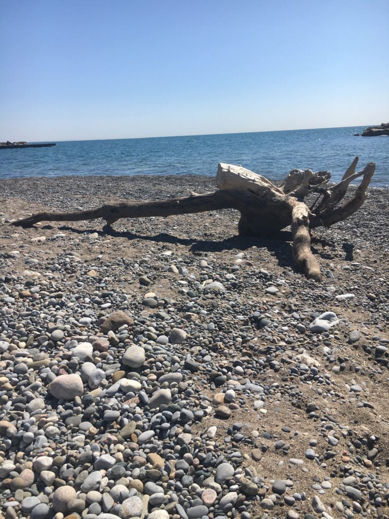 a big piece of of driftwood on the beach