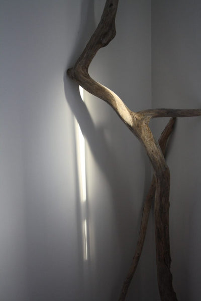 a piece of driftwood leaning against a wall