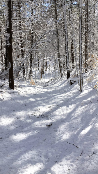 Snowy Bluebird trail at Long Sault Conservation Area