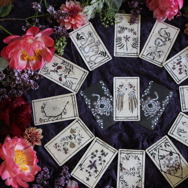 Ophidia Rosa Tarot by Leila + Olive - The Scarlet Sage Herb Co.
