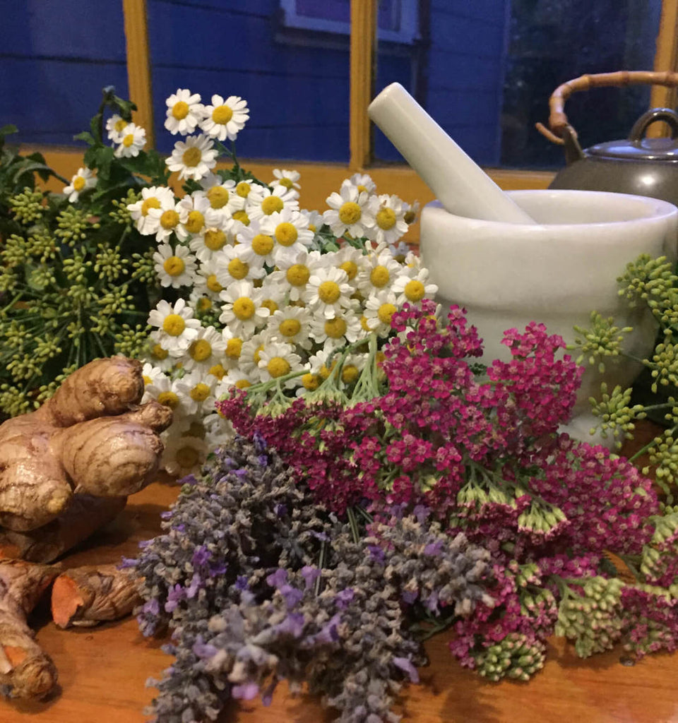 The Herbal Medicine Chest for Beginners with Lisa Sanderson-Fox - August 18, 10am-1pm