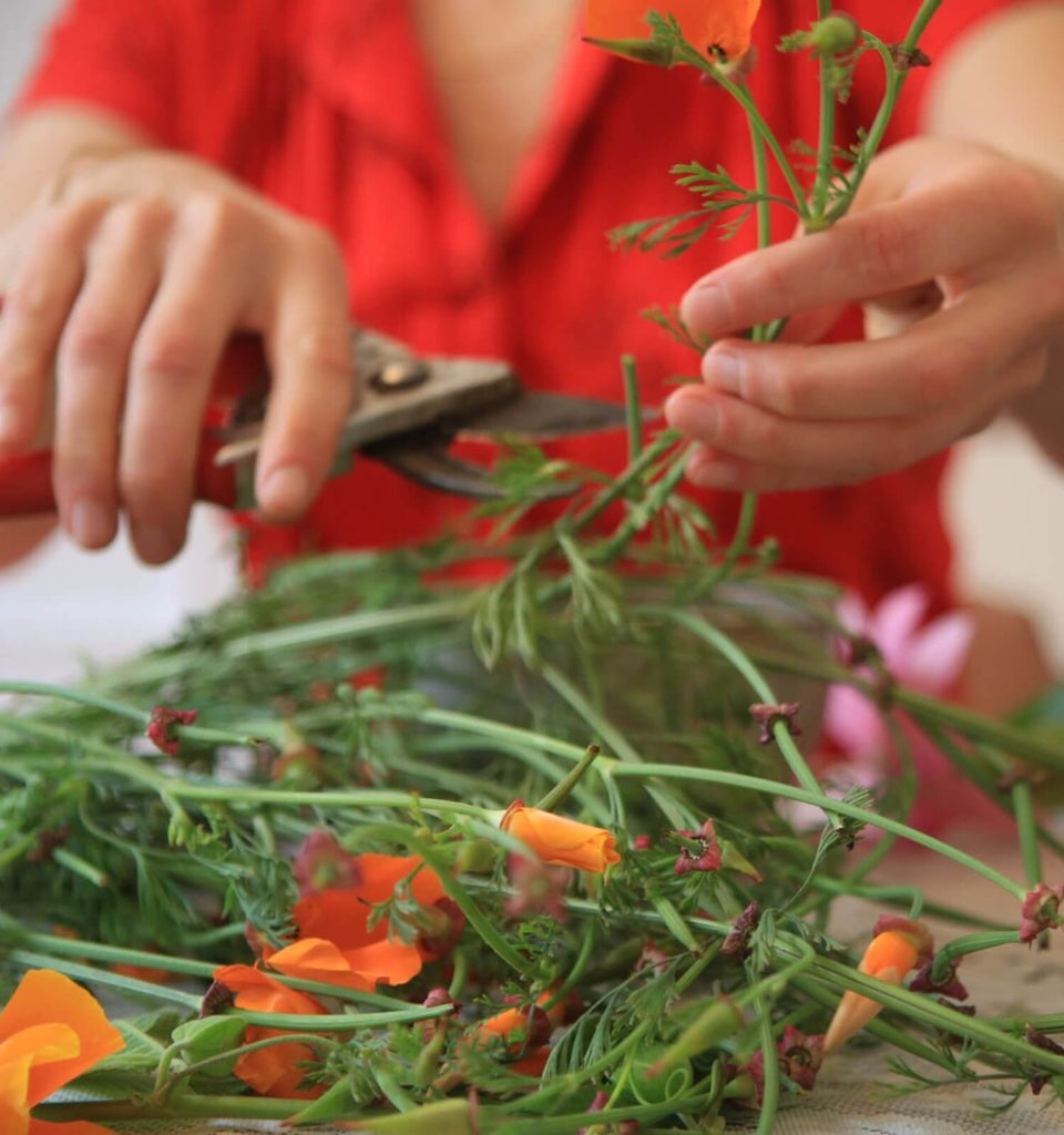 Grow Your Medicine Intensive with Bonnie Rose Weaver - March 23, 1-5pm - The Scarlet Sage Herb Co.