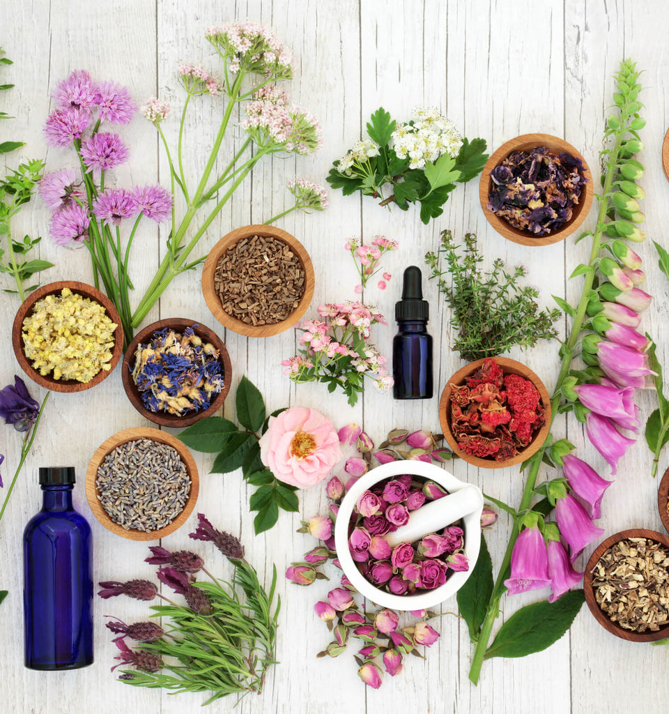Community Herbalist Workshop - June 25th, 7-9pm - The Scarlet Sage Herb Co.