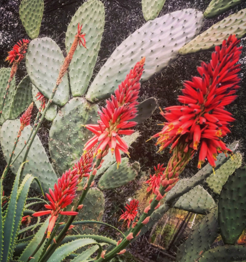 Ancestral Plant Walk in Bernal Heights with Rosi Bustamante and Bonnie Rose Weaver - July 18th, 10am-1pm - The Scarlet Sage Herb Co.