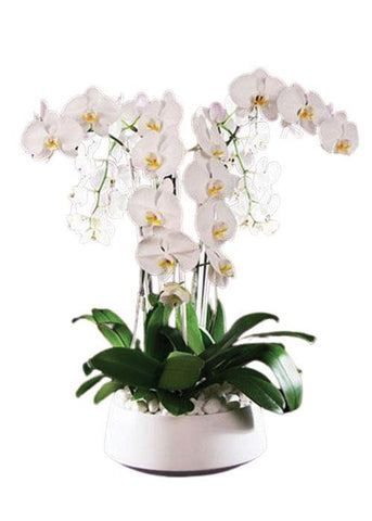 Flawless Orchids