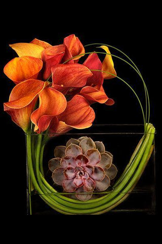 Modern display of Calla Lilies available in different colors arranged in a rectangular vase.