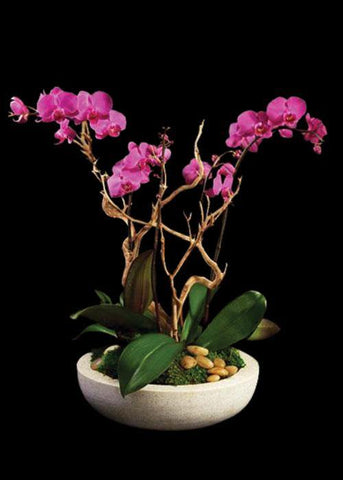 Marvelous Orchids