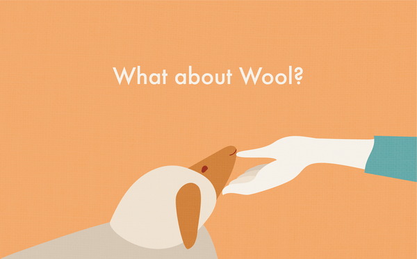 Focus on Fibre: Wool & Recycled Wool