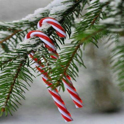 Have a Candy Cane Hunt!