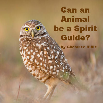 Can an Animal be a Spirit Guide?