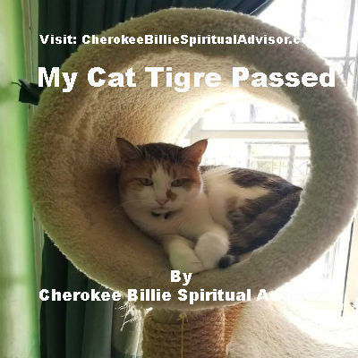 My Cat Tigre Passed