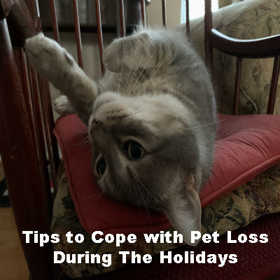 Tips to Cope with Pet Loss During The Holidays