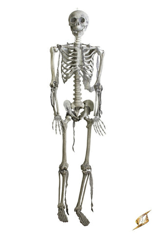 Skeleton Full Size