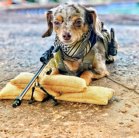 Tactical taz with miniature goatgun