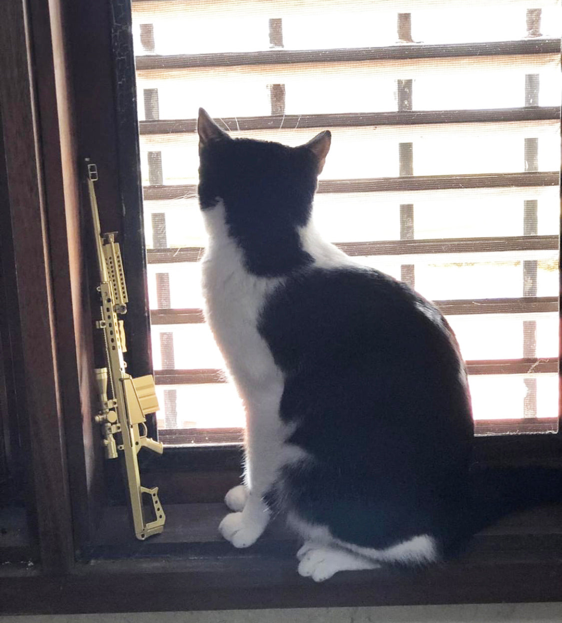Cat looking out window with mini .50 cal by it